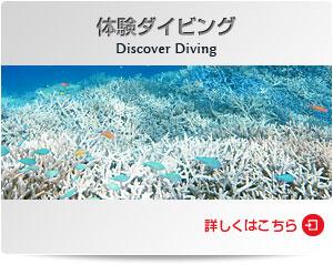 ダイビングショップWOW|体験ダイビング